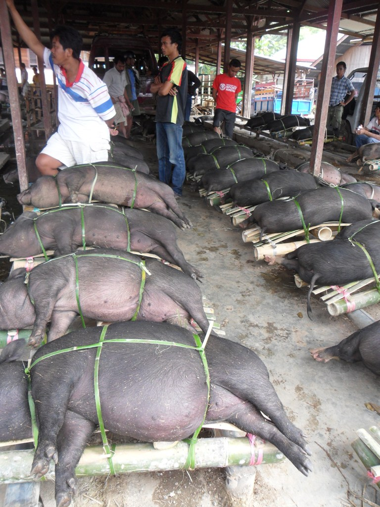 SELLING PIG AT BOLU MARKET.
